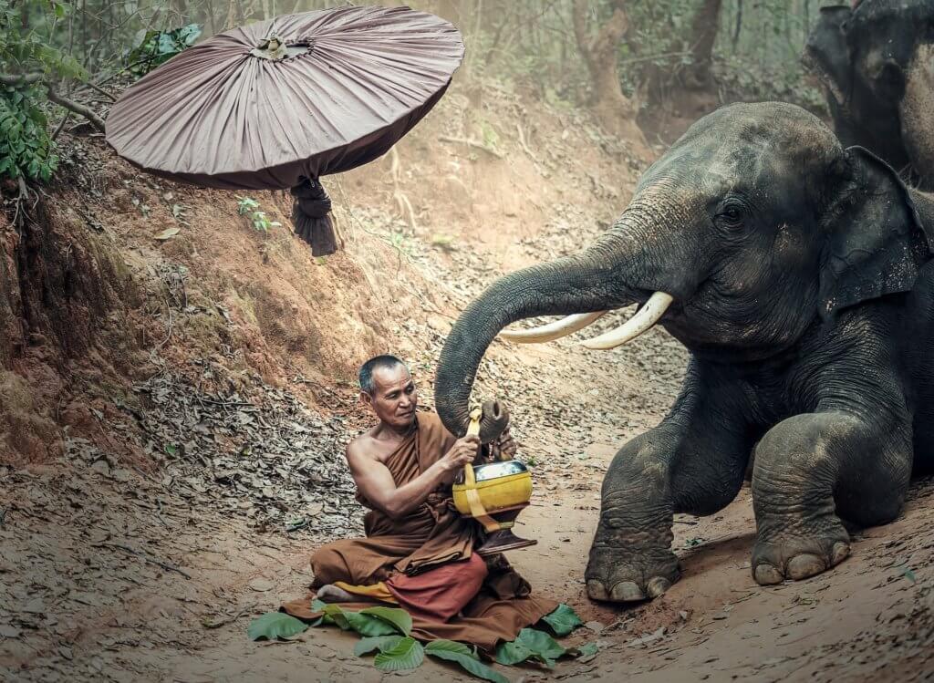 Myanmar-Elefanten-Camp-heo-reise-buchen-myanmar