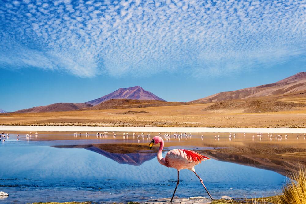 Bolivien-Reiseprogramme-Laguna-Hedionda-kurzprogramm-mit-reiseleiter-individuelle-rundreise-suedamerika-länder-reisekombination