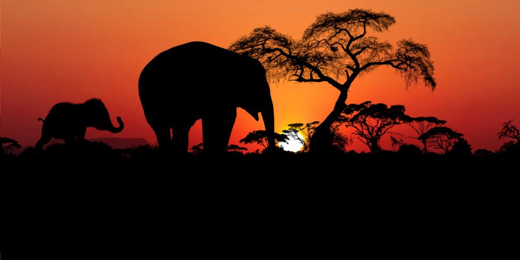 Safari-reiseplanung-südafrika-individuell-unterwegs-mietwagenrundreise-erleben-reisespezialist-elefanten