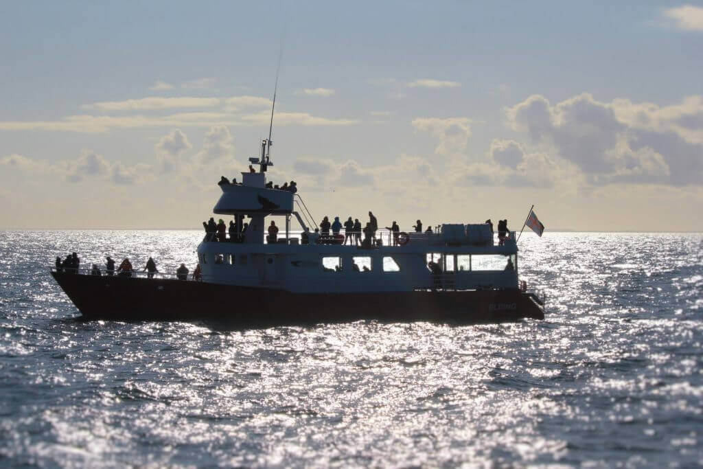 Island-Walbeobachtung-reykjavik-unterwegs-nordeuropa-reisen-reykjavik
