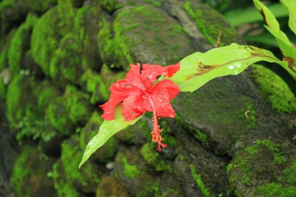 indonesien-urlaub-bali-flora-und-fauna-reise-reisespezialist