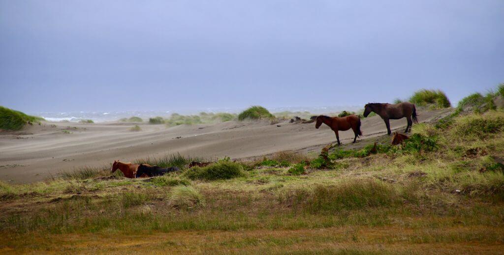 organisierte-rundreise-chile-landschaftsfotographie-fotourlaub-chile-fotoreise-tierfotographie-chiloe-island-wanderreise-trekkingurlaub-wilde-natur-erleben