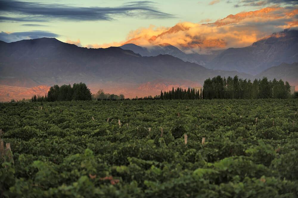 suedamerika-weinreise-genussreise-Argentinien-Rundreisesuedamerika-planen-reisespezialist