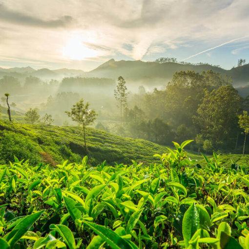 alleine-reisen-kolumbien-rundreise-aktiv-kaffeezone-suedamerika
