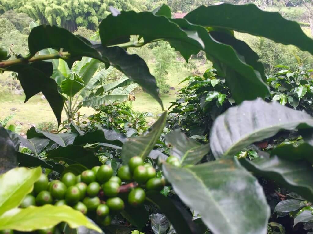 salento-kolumbien-kaffeezone-suedamerika-reisen-plane-deinen-urlaub