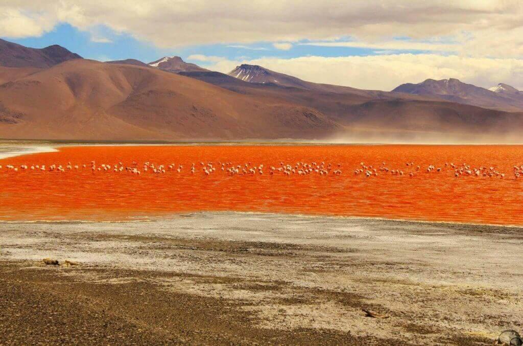Bolivien-Reiseprogramme-reise-buchen-laguna-colorada-altiplano-chile-peru-bolivien-kombination-reisespezialist-suedamerika-rundreise