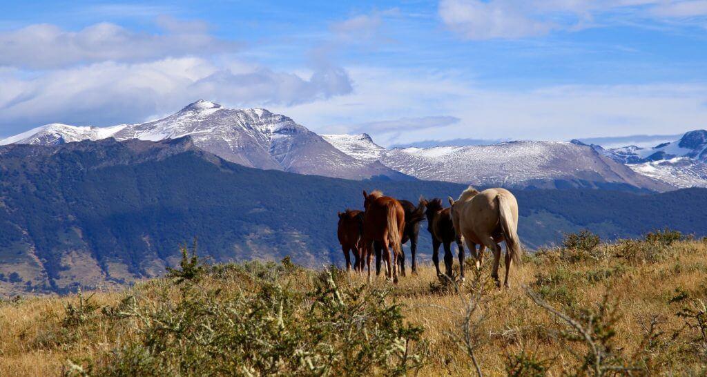 organisierte-rundreise-chile-tierfotographie-geplantereise-landschaftsfoto-punta-arenas-chile-luxusurlaub-individualreise-naturfoto-individuell-urlaub-reise-reiseidee-reisetip-urlaubsidee