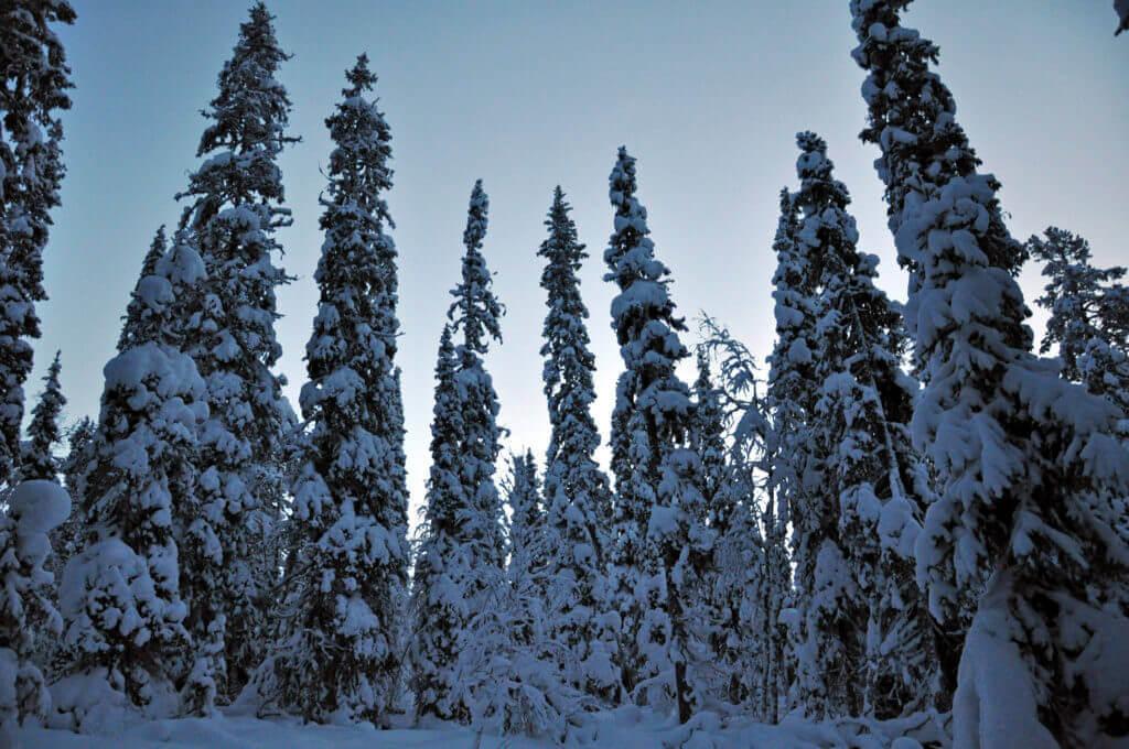 hundeschlitten-tour-lappland-finnland-winter-reise-buchen