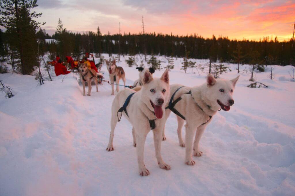 hundeschlitten-tour-lappland-buchen-finnland-winter-reise-planen