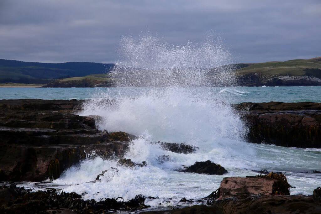 neuseeland-catlins-wale-watching-beobachten-strandspaziergang-natur-erleben-fotos-fotourlaub-reisebericht-reisebüro