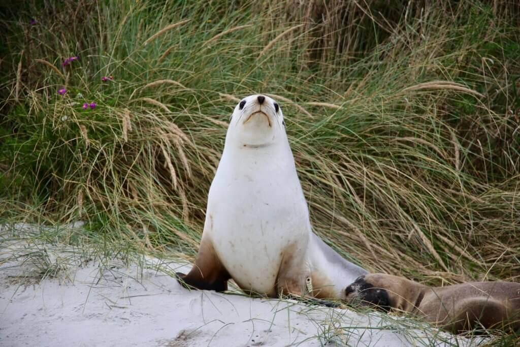 neuseeland-Otago-Peninsula-Tierbeobachtung-rundreise-reiseprofi-fotourlaub-fotoreise-tierfotografie-tiere-rundreise-reisebüro-