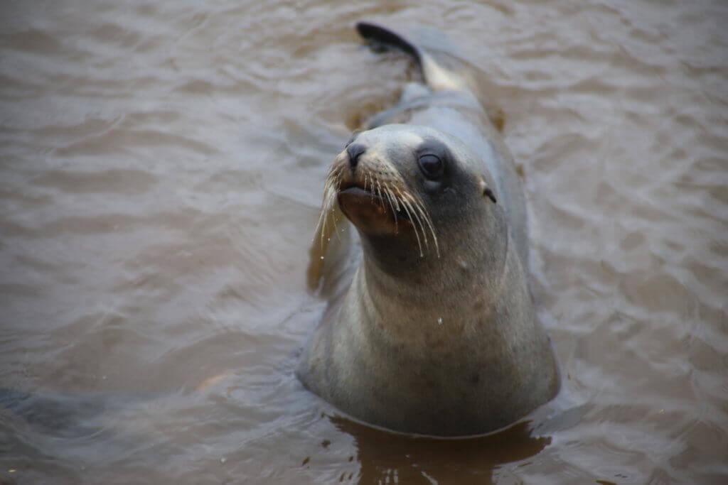 dunedin-tierbeobachtung-rundreise-reisesplaner-fotourlaub-fotoreise-tierfotografie-tiere-rundreise-reisebüro-perönliche-betreuung-beratung