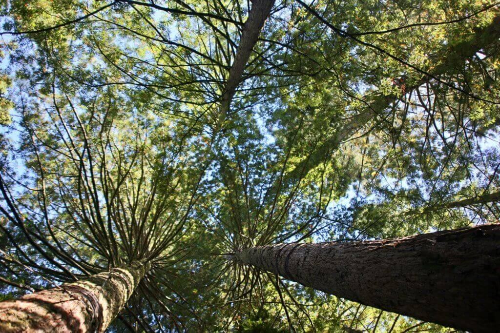 neuseeland-redwood-forest-reisebüro-sicher-urlaub-machen-urlaubspezialist