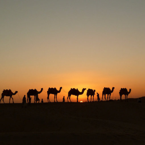 buchen-oman-rundreise-reisespezialist-orient-wuestentour-kamele-Rajastan