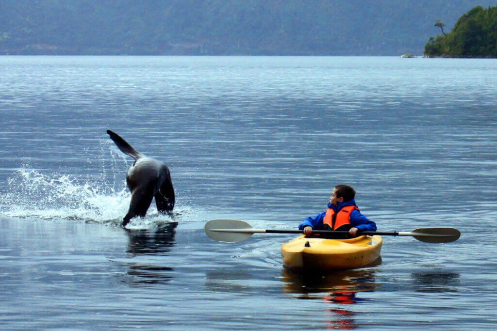 reisespezialist-patagonien-fjorde-reise-buchen-organisierte-rundreise-chile-mietwagenrundreise-lodge-fotoreise-luxus-geplante-reise-chile-Puyuhuapi