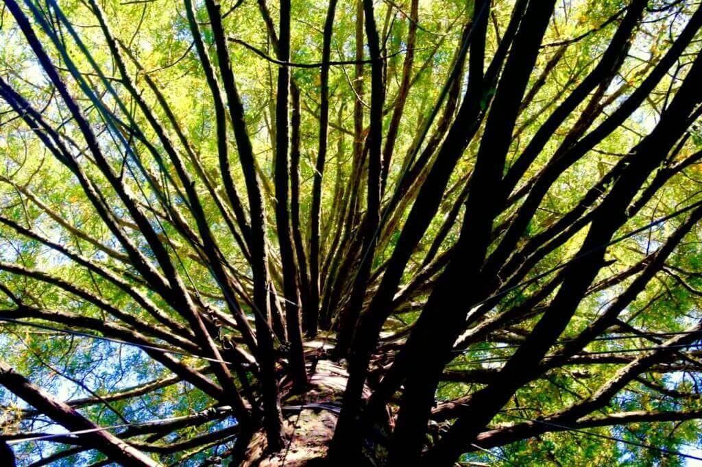 reedwood-forest-neuseeland-urlaubsberater-tagesziel-hot-spot-urlaub-fotoreise-fotourlaub