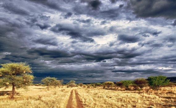 mietwagenrundreise-namibia-in-afrika-wildlife-reise-planen