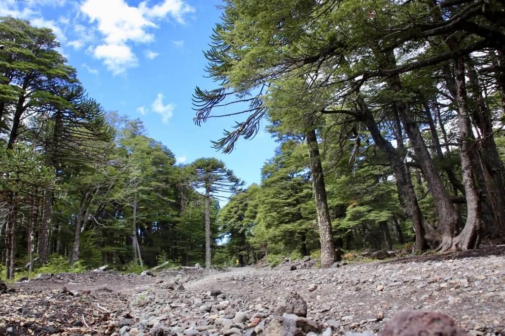 chile-seengebiet-roadtrip-südchile-auto-goholidate-selbstfahrerreise-wanderurlaub-trekkingurlaub-fotoshot-nice-shot-fotographieren