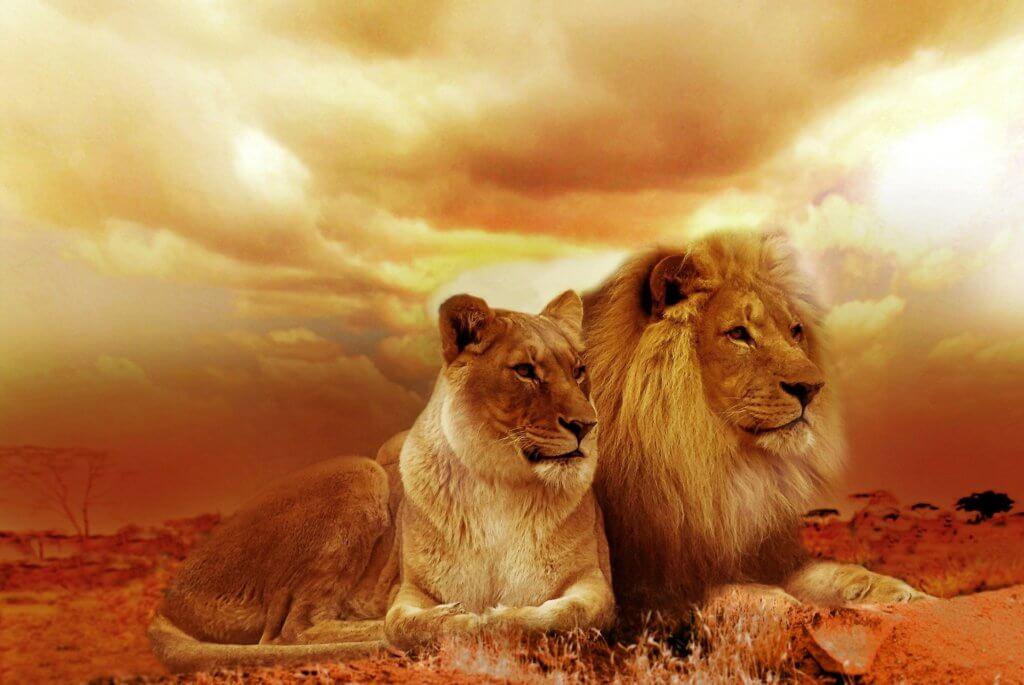 luxus-reise-afrika-namibia-mietwagenrundreise-safari-unterwegs-mit-mietwagen-reisespezialist