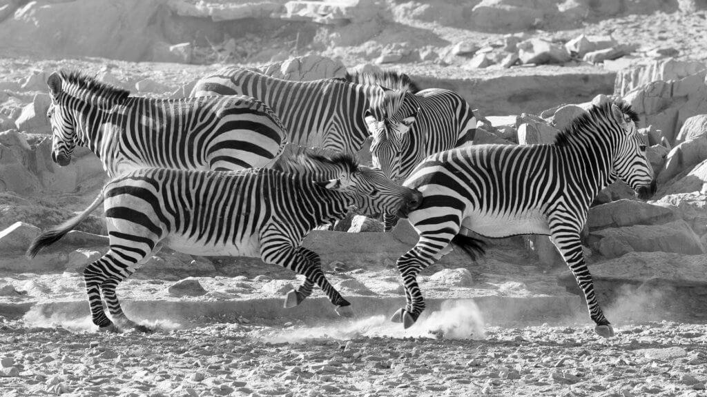ethosha-park-safari-mietwagenrundreise-namibia-reise-planen-unterwegs-in-afrika-reiseplaner