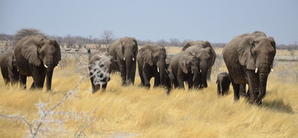 afrika-urlaub-planen-Mietwagenrundreise-Namibia-safaris-individuelle-rundreise-planen-reisespezialist-namibia