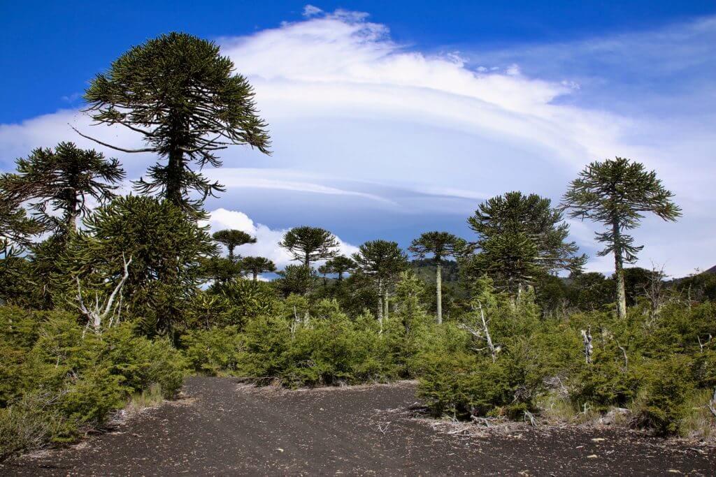 roadtrip-schöner-urlaub-chile-seengebiet-auto-selbstfahrerreise-fahrspass-wanderurlaub-reisespezialist-auskunft-tips-beratung-trekkingurlaub
