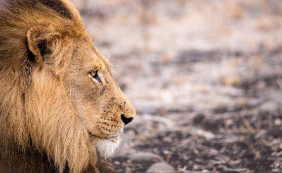 suedafrika-tiere-mietwagenrundreise-buchen-rundreise-planen-reisespezialist-mietwagenrundreise-safari