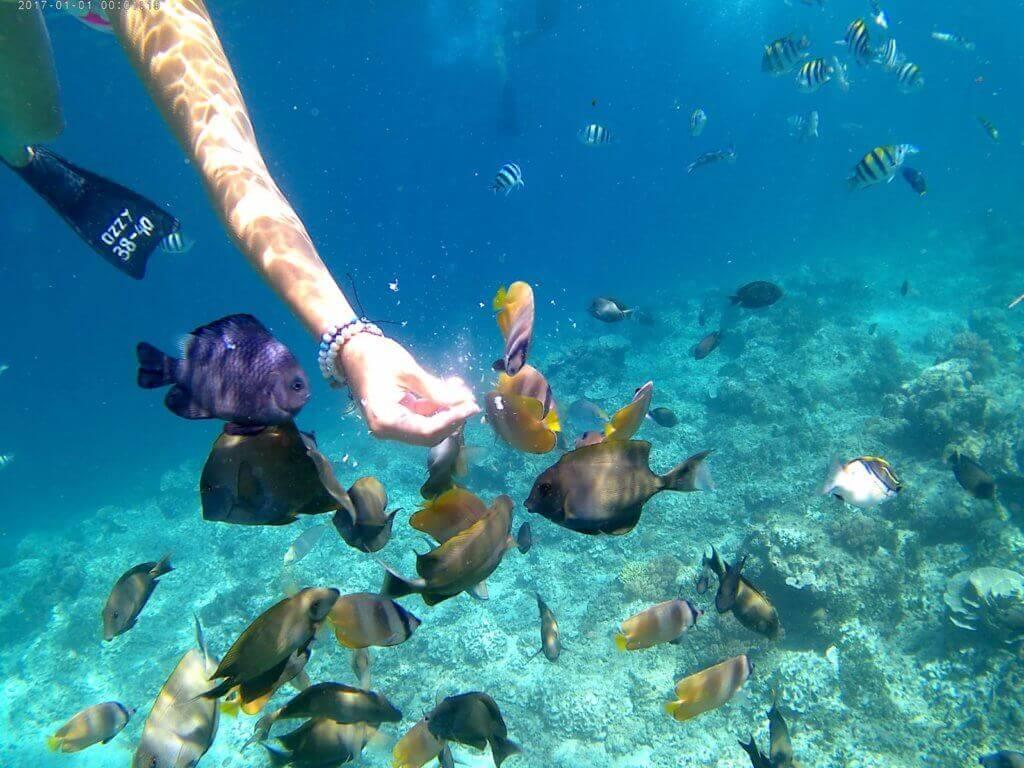 bali-gilli-islands-tauchen-tauchreiseexperte-reisespezialist-urlaub-indonesien-planen