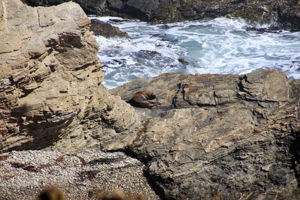 punta-de-lobos-roadtrip-wanderurlaub-chile-auto-selbstfahrerreise-ozean-nationalpark-bluewater-trekkingurlaub-fotoshot-nice-shot-fotographieren