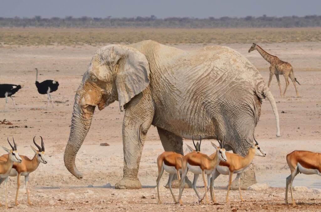 mietwagenrundreise-namibia-luxusreise-reisespezialist-namibia-wildlife-safari-gruppenreise-namibia-reise-afrika-mietwagenrundreise