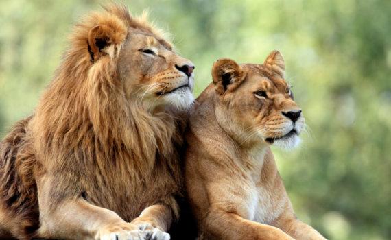 rundreise-mietwagen-wildlife-Suedafrika-individuell-Mietwagenrundreise--safari-afrika-reisespezialist-urlaub-garden-route-planen